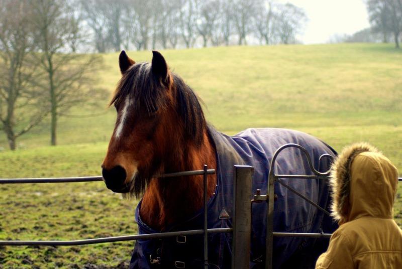 5 claves del cuidado y bienestar del caballo