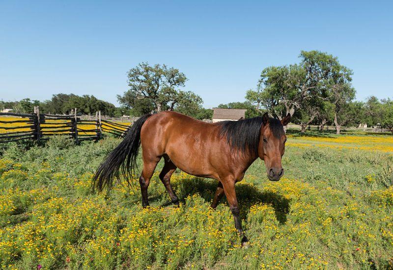 Cuidado del caballo en primavera